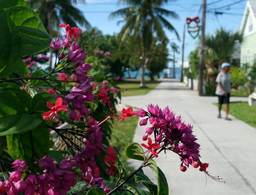 Street scene, Green Turtle Cay, Bahamas