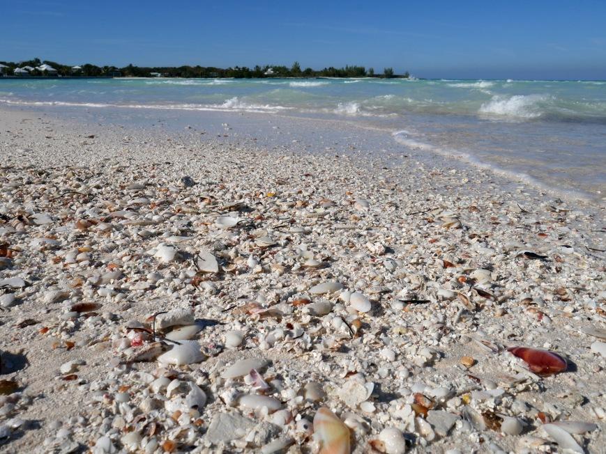 Seashells on Gillam Bay Beach - Green Turtle Cay, Bahamas