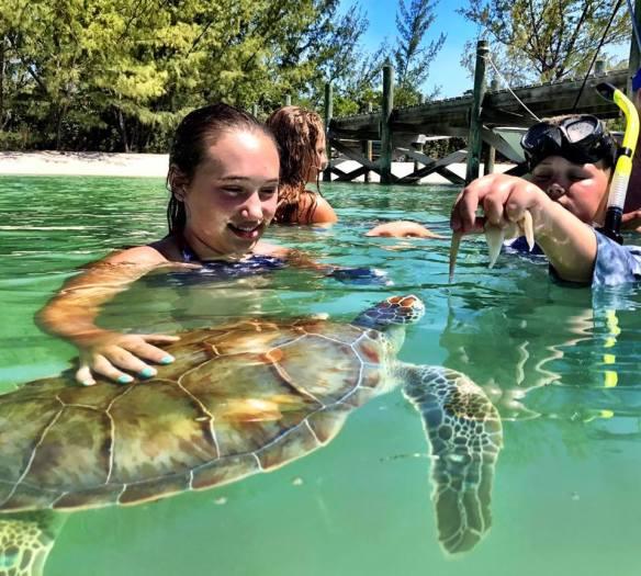 Feeding the turtles at Coco Bay - Green Turtle Cay, Abaco, Bahamas.