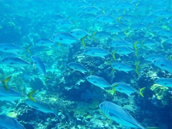 Snorkeling at Sandy Cay (Photo: Patti Hanafourde) Abaco, Bahamas
